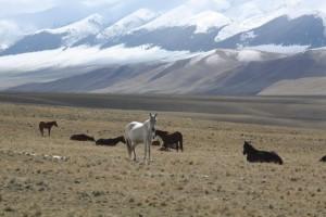 Horses on the Assy Plateau, Kazakhstan